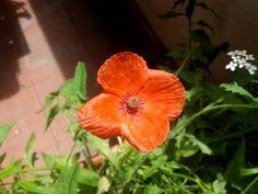 #natural #color #red #rojo