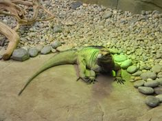 Colchester zoo Colchester Zoo, Beautiful Creatures, Animals, Animales, Animaux, Animal, Animais