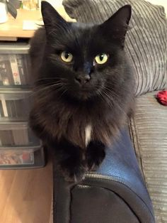 Please help Figaro! Figaro is missing from Edward Street, Acre (near Winfield's, Haslingden), Lancashire Distinctive Features: Long haired, has white tuft on chest Registered with: Myerscough Vets Missing since: Wednesday, 23rd March 2016 He is microchipped and neutered Please if you see him or know where he is contact us on 07730 448768 or 07568Read More