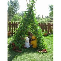 Bean teepee!! http://www.homeharvest.co.nz/products-gifts?product_id=205