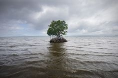 global warming impact: islands nations under water