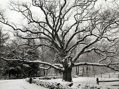 Winter wallpapers - winter Wallpaper