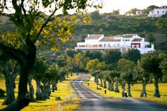 The design and country hotel Vila Valverde is located on the outskirts of Lagos in the Algarve, in a beautiful location overlooking the bay of Praia da Luz. Hotels In Portugal, Country Hotel, Country Estate, Algarve, Local Activities, Holiday Accommodation, Hotel S, Outdoor Pool, Great Places