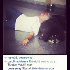 @Cesar Millan: Second siesta in my life. #regram #repost #LiderdelaManada #ilovetibetanmastiffs #dogoftheday @achianea