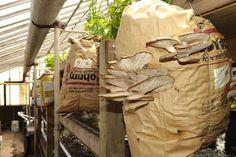Urban Mushroom Farming – 4 Great (yet small) Enterprises