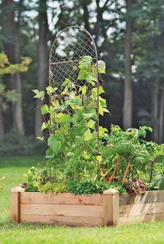 Two-Panel chicken wire trellis pea trellis wire trellis, tre Pea Trellis, Wire Trellis, Moon Garden, Dream Garden, Chicken Wire Crafts, Cucumber Trellis, Vertical Garden Wall, Large Planters, Flowering Vines