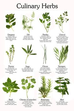 Guide to Herbs. Here you go, Rachel! This should help get your back garden in order. :)