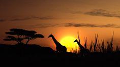 Le tourisme en Afrique by Hôtel*** RESTAURANT gourmand COCO LODGE MAJUNGA