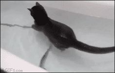 Kitties are so cute when they swim!!