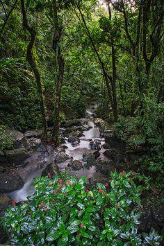 La Coca Falls  (foto de Eduardo Romero)  Palmer en Rio Grande, PR
