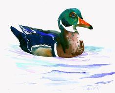 Wood Duck art original watercolor painting 14 x11 by ORIGINALONLY