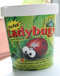 The Moffatt Girls: 1,500 Ladybugs!
