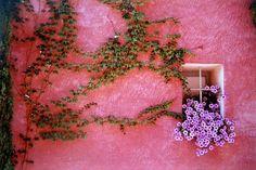 Borostyán rózsaszín randi