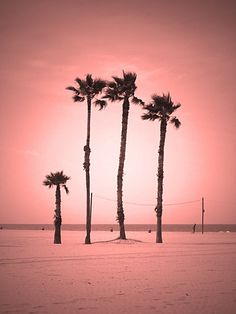 venice beach california // palm trees
