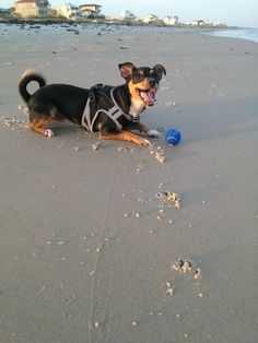 """it was so nice to let him just be a dog on the beach for a week, instead of the hard working service dog he is."""