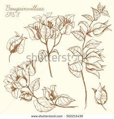 Resultado de imagen para bougainvillea line drawing
