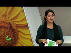 #greentv #agriculture #sunflower #oilseeds #farmers सूरजमुखी समशीतोष्ण देशों में पैदा होने वाली सबसे महत्वपूर्ण तेल के बीज की फसल है। यह संसार में वनस्पति तेल का सबसे मुख्य स्रोत है। भारत में इसकी लोकप्रियता देश में ही तेल का उत्पादन होने से बढ़ी है। भारत संसार में तेल के इन बीजों का सबसे बड़ा उत्पादक देश है। तेल के बीज भारत की कृषि अर्थव्यस्था में महत्वपूर्ण स्थान रखते हैं।सूरजमुखी भारत में सबसे तेजी से प्रगति करने वाली तेलबीज की फसल है। कई वर्ग भूमि तथा उत्पादन के आधार पर यह तेल के बीजों में…