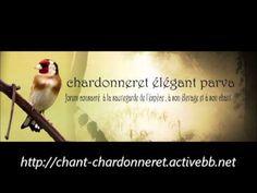 Chants d'oiseaux de France partie 1 - YouTube Goldfinch, Zine, Singing, Youtube, Nature, Musica, Wings, Naturaleza, Youtubers