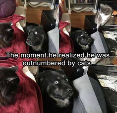 funny cats memes