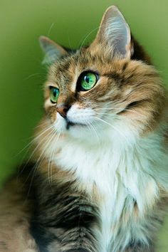 * * CAT SNIP: Like human fingerprints, the pattern on a cat's nose is unique to each animal.