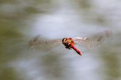 Flying by Michel  ZAREBSKI on 500px