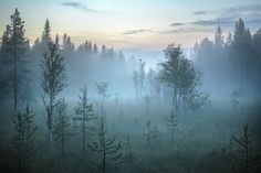 Trees in mist, Lapland, Finland, Europe - Buy this stock photo and explore similar images at Adobe Stock Side Hip Tattoos, Foggy Mountains, Natural Scenery, Island Life, Wells, Mists, Travel Photography, Beautiful Pictures, Stock Photos