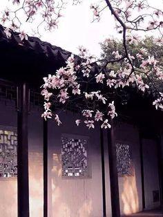 玉兰 Chinese Background, Background Pictures, Chinese Architecture, Beautiful Architecture, Chinese Garden, Chinese Art, Yuki Sohma, Muse Art, Fantasy Places