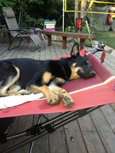"""Lucy relaxing after a hard day as """"Ambassador Dog"""" at a GSRNC Adoption Day.  072013."""