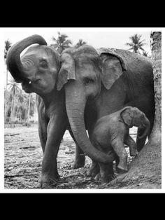 Elephant mothers
