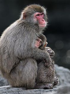 Warm Wishes! Cute Animals Cuddling - NIPPING AT YOUR NOSE - Exotic Animals & Pets, Pet Photo Special : People.com