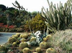 Huntington Desert Garden