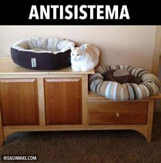 Antisistema.
