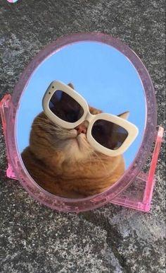 Cute Animal Memes, Cute Animal Photos, Animal Jokes, Cute Funny Animals, Funny Animal Pictures, Cute Cat Wallpaper, Cute Patterns Wallpaper, Gatos Cool, Cat Aesthetic