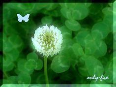 flower(1) - miki 2 - Picasa ウェブ アルバム