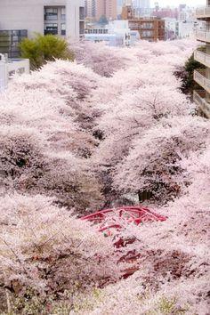 //Sakura