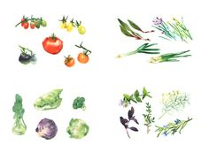 herbs and vegetables, watercolor posters summer kitchen https://www.etsy.com/shop/mywhiteroom