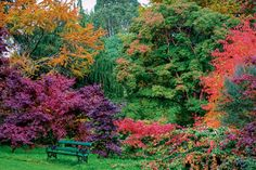 Image of the Day: A colourful Autumn in Wicklow - WorldIrish