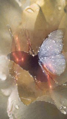 Butterfly Gif, Butterfly Quilt, Butterfly Pictures, Flower Wallpaper, Wallpaper Backgrounds, Beautiful Horse Pictures, Les Gifs, Glitter Gifts, Glitter Graphics