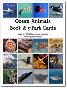 Downloadable, Montessori-friendly Ocean-Animals 3-part cards and Ocean Animals Book for studying ocean animals. These beautiful images will be a great addition to your study of ocean animals! #ocean #Montessori || Gift of Curiosity