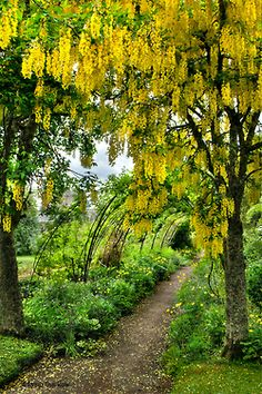 Cawdor Castle Gardens, Scotland (by walla2chick)