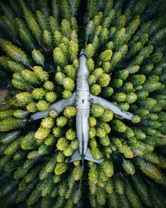Abandoned Jet in an Indonesian Forest. This really cool & a very good example of nature. Canon Photography, Aerial Photography, Nature Photography, Travel Photography, Digital Photography, Photography Store, Photography Lighting, Photography Awards, Newborn Photography
