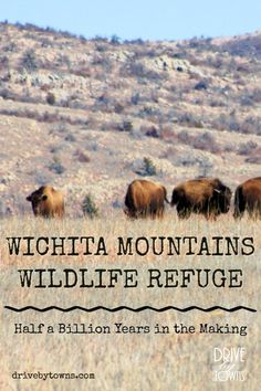 Pin this! Wichita Mountains Wildlife Refuge