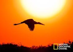 Descubra as belezas naturais do Pantanal. Brasil Secreto, Pantanal.  #NatGeo Confira conteúdo exclusivo no www.foxplay.com