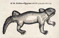 The History of Four-footed Beasts and Serpents (1658) | The Public Domain Review