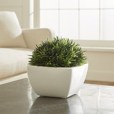Shop Potted Moss.  Spring sprigs in verdant green add fresh colors and lush textures to shelf or tabletop.  Cluster in groups or array in a row for added impact.  Chunky white stoneware base adds to its own charm.