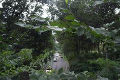Sim, tem ruas dentro do Central Park, você sabia disso? #NYC #DescobrindoNewYork
