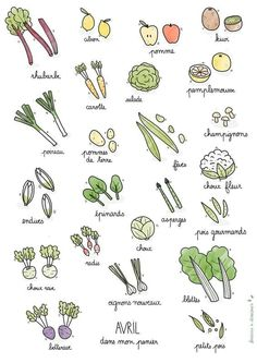 Fruits et légumes de saison Avril Bullet Journal Themes, Bullet Journal Inspiration, Bullet Journals, Journal Ideas, Tatin Endive, Trommler, Chou Rave, Paleo Protein Powder, Recipes