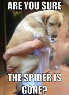 This is so me when there's a spider around.