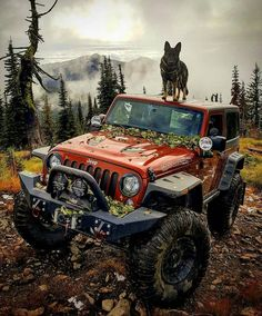 Jeep and dog