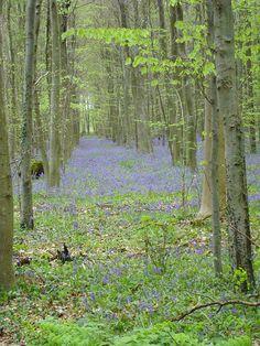Au détour d'une balade en forêt au printemps, un parterre de fleurs, une jolie chose de la nature.